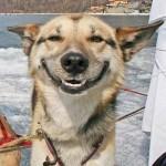 dog - feeling