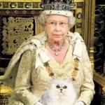 Queen+cat